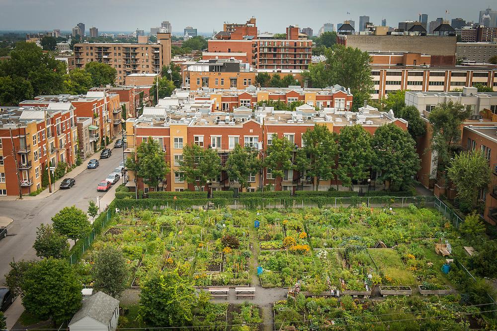 Jardin communautaire du Mile-End, avenue Henri Julien et rue Maguire, arrondissement le Plateau Mont-Royal, Montréal, Québec