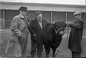 1963 - Bull Show at the R.D.S. Dublin, Ireland.