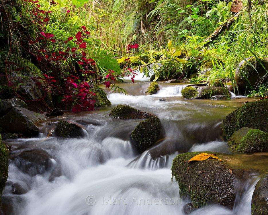 Beautiful flowing stream in temperate rainforest in the Papua New Guinea highlands.
