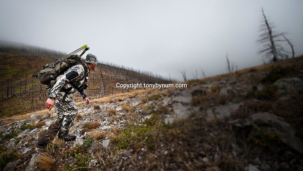bowhunter hunting elk deer mountains of montana burn area, fall hunting, bow hunting