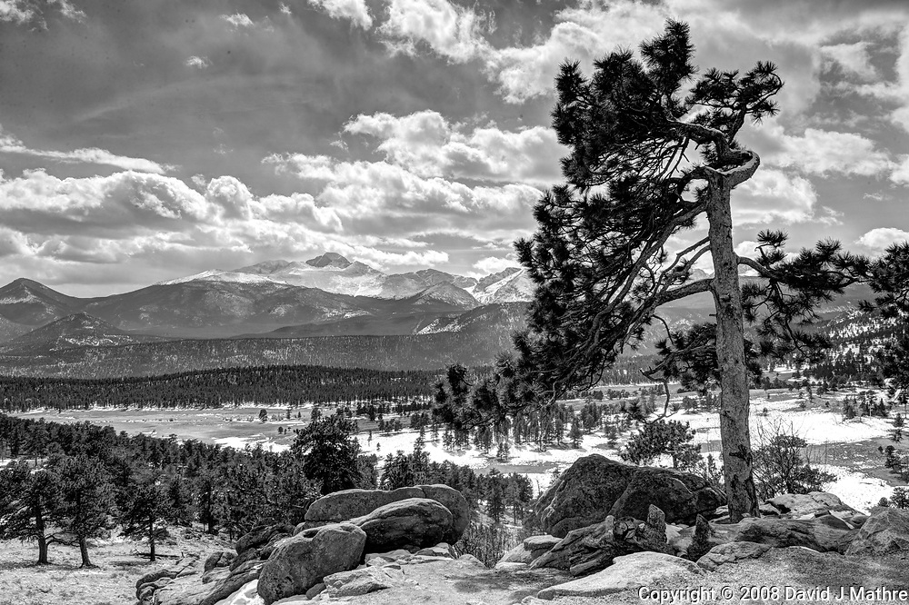 Pine tree in the winter. Rocky Mountain National Park. Composite of seven images taken with a Nikon D3 camera and 24-70 mm f/2.8 lens (ISO 200, 27 mm, f/16, various). Raw images processed with Capture One Pro, and HDR composite generated using Photomatix Pro.