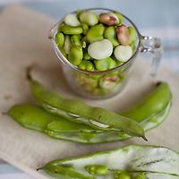 Broad Bean Pesto