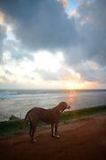 Street dog in Galle Fort, Sri Lanka