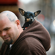 SHOT 11/11/2007 - A Fort Collins, Co. resident pauses to talk as he walks down a street in Old Town Fort Collins with his pet chihuahua in the back hood of his jacket. The City of Fort Collins, a home rule municipality situated on the Cache la Poudre River along the Colorado Front Range, is the county seat and most populous city in Larimer County, Colorado. With roughly 130,000 residents, making it the fifth most populous city in Colorado, Fort Collins is a large college town, home to Colorado State University. It was named Money magazine's Best Place to Live 2006. Includes images of Old Town, a restored historic district, which offers a look at the earliest roots of the city, and has plenty of good shopping opportunities..(Photo by Marc Piscotty/ © 2007)