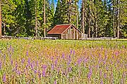 Wildflowers, Wooden Fence & Old Barn, Hetch Hetchy, Yosemite, California