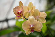 detail of a beautiful orchid plant