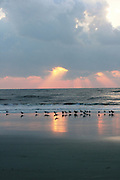 A firey sunrise on a Jekyll Island Beach, reflected in the wet sands with silhouetted sea birds searching for food.