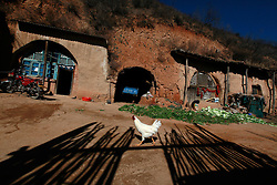 A picture made available on 06 November 2012 of a chicken walking past 'yaodongs' or cave homes in the rural outskirts of Yan'an city, Shaanxi Province China, 05 November 2012. The 'yadong' or cave dwellings are typical in the plateaus of northern China in Shaanxi Province where many of Yan'an's rural population still live in. They are mostly carved out from the yellow earth of the Loess hillsides and are about seven to eight metres deep with height and width of three metres. Former Communist leader Mao Zedong and his comrades are known to have hid in these cave homes during the civil war between the communists and nationalists in 1936 to 1948 as they battle the Kuomintang forces. Chao has lived in his cave home in the Loess mountains of Yan'an for more than 60 years, mostly in poverty and hardship as a farmer and was one of the few to have lived through the period of turmoil during the civil war. China's new leaders slated to take over during the 18th National Congress beginning on 08 November are likely to face mounting pressures to tackle the country's rising income inequalities between urban and rural areas that are often the source of simmering resentment and growing unrests on the grassroot level.