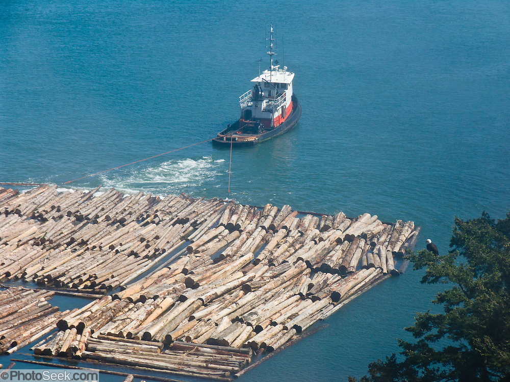Tugboats pull a huge raft of harvested logs through Deception Pass, a strait of water separating Whidbey Island from Fidalgo Island. A bald eagle rests in a nearby tree. Deception Pass connects Skagit Bay (part of Puget Sound) with the Strait of Juan de Fuca, which are all part of the Salish Sea. Deception Pass is the most-visited State Park in Washington.