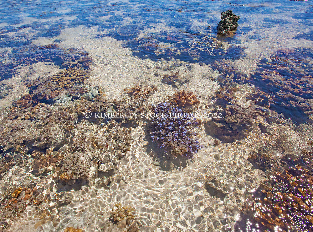 A variety of corals and sponges exposed in shallow water on top of Montgomery Reef.
