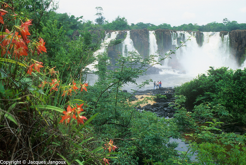 Santo Antonio waterfall on Jari river coming down from Guiana (Guyana) Highlands, Guiana Shield, Brazil, with Hippeastrum puniceum (Amaryllidaceae).