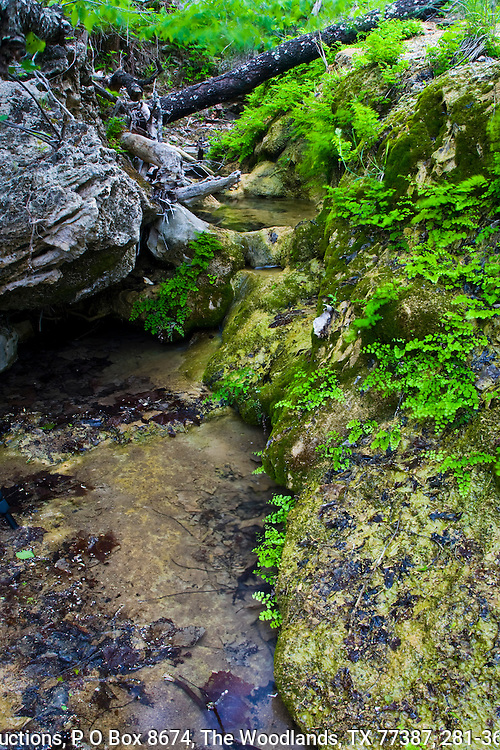 Spring fed stream in the Texas Hill Country, central Texas.