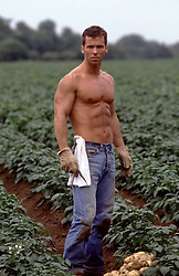 shirtless farm worker in a potato field