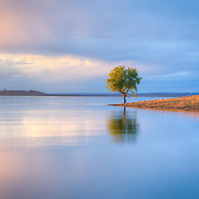 This Cottonwood Tree stands at the water's edge of Folsom Lake. In 2011 the Sierra Nevada saw record late snow a lot of which comes down the American River and empties into Folsom Lake. http://1.usa.gov/tekBKE