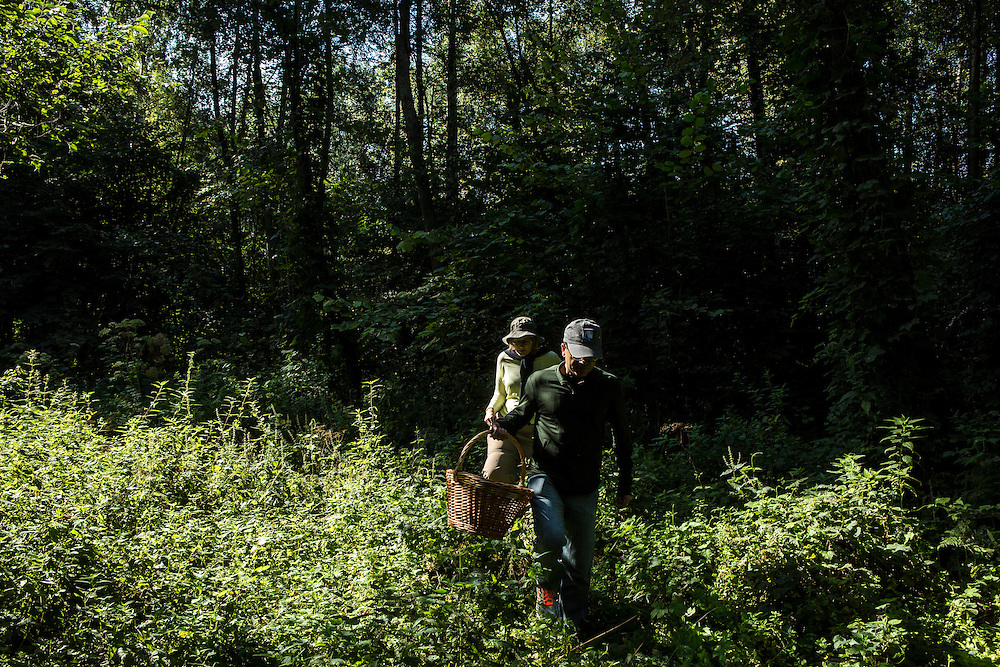 Ahkil Sharma and his wife Lisa search for mushrooms near at Potapovo Farm on Sunday, August 18, 2013 in Potapovo, Russia.