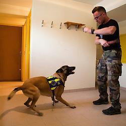 Entra&icirc;nement h&eacute;litreuillage des &eacute;quipes cynophiles de la Gendarmerie Nationale avec le concours de la SAG de Lyon Bron. Entra&icirc;nement de chiens d'attaque et de chiens de recherche de produits stup&eacute;fiants.<br /> Septembre 2016 / FRANCE<br /> Voir le reportage complet (36 photos) http://sandrachenugodefroy.photoshelter.com/gallery/2016-09-Exercice-cynophile-Complet/G0000P7u90GHZILk/C0000yuz5WpdBLSQ
