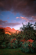 Flat-topped Cathkin Peak 3149m and Sterkhorn 2973m at sunrise from Monks Cowl Forest Station, Mdedelelo Wilderness. Ukhahlamba-Drakensberg Park, KwaZulu-Natal, South Africa.  Nikon F90, 24/2.8D. Fuji RDPII. April 1996.