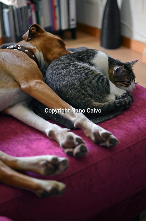 Dog and cat sleep together on sofa