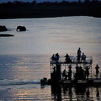 Botswana, Chobe National Park, Tourist boat approaches Elephants (Loxodonta africana) in Chobe River at sunset