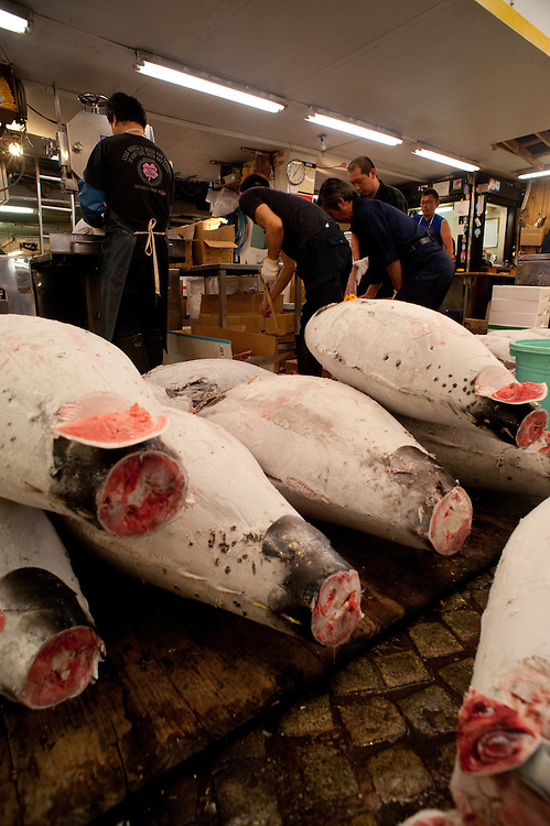 Frozen tunas piled up, waiting for  workers to cut them up with a band saw.  The thawed slices show each fish's quality.