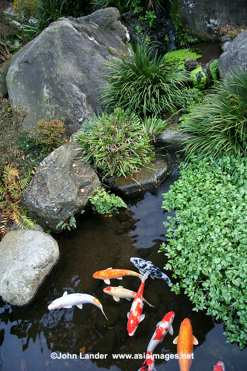 koi carp pond john lander photography