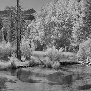 Bishop Creek Middle Fork - Infrared Black & White