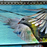 Pigeon Mural in Portsmouth, New Hampshire<br /> Portsmouth is a small seaport of about 21,000 people along the Piscataqua River in New Hampshire. During colonial America, from 1603 until 1807, the town maintained a major harbor to the Atlantic Ocean. This mural of a pigeon with dripping streaks of paint is located near the Market Square and North Church.