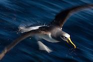 Seabirds of New Zealand.