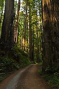 Prairie Creek Redwoods State Park, dirt road, California