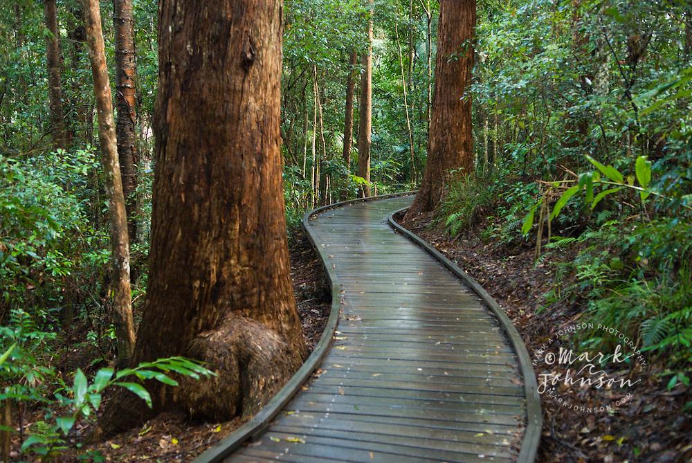 Forest walkway, Kondalilla National Park, Queensland, Australia