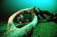 FERNSTEINSEE, NASSEREITH, AUSTRIA: Scuba diver in a weird and calm place, viewed through a hole in the branch of a tree