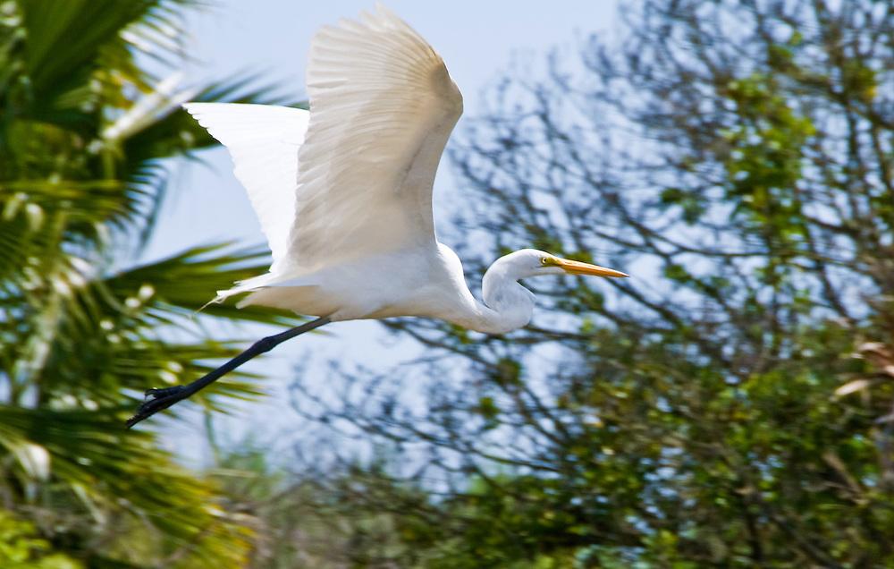 Flying crane at South Coast Botanic Garden, Palos Verdes, California