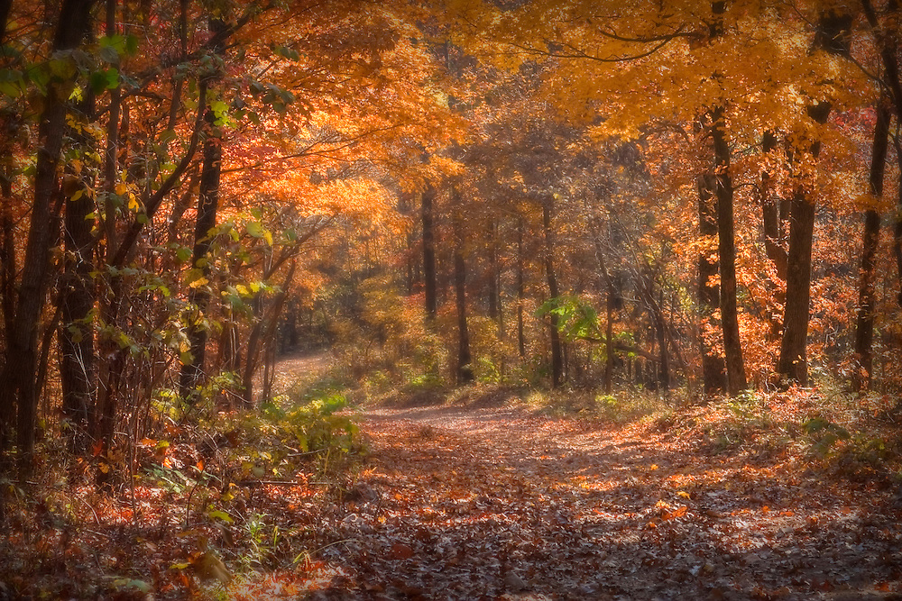 Fall in the Ozarks.