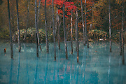 cold, japan, landscapes, photography, winter, lake, blue pond, Hokkaido, fall, colors, autumn, tree, forest, travel ,landscape, fineart, photo,image, photography,
