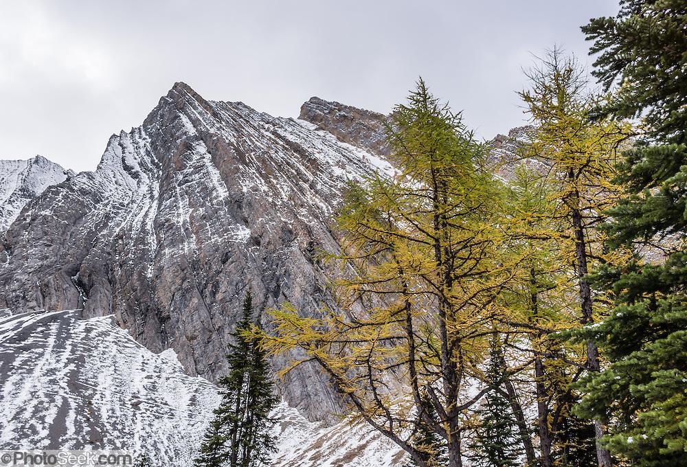 chester lake canadian rockies - photo #4
