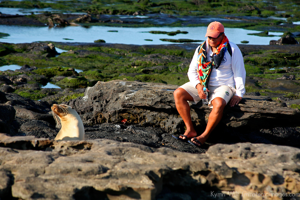 South America, Ecuador, Galapagos Islands, Santiago Island, James Island, Port Egas. Sea Lions in the Galapagos have little fear of humans.
