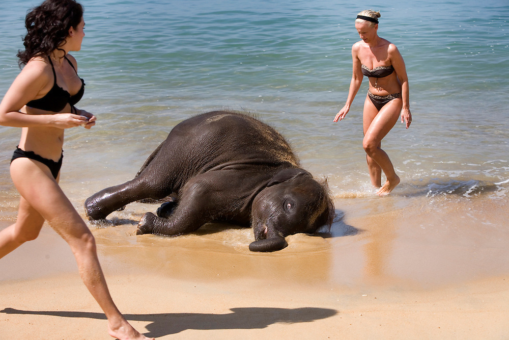 An elephant cools itself off in the surf on a beach in Thailand