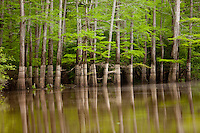 This photo of Bayou Bartholomew was taken near Selma, Arkansas.  This is the longest Bayou in the United States, starting in Pine Bluff, Arkansas and running 359 miles to Morehouse Parish, Louisiana.