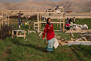 Bekaa Valley, Lebanon: Syrian refugees construct an improvised tented shelter on farmland by the main highway.