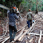 Men carry a chainsaw and gasoline further into the rainforest at an illegal logging camp on the Lukenie River near Bisenge, Democratic Republic of the Congo, May, 2009.