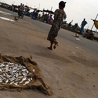 A Santhome fisherman's catch. Santhome Beach and adjoining Marina Beach in Chennai, India were hit hard by the 2004 Tsunami. Fishermen and their families were the main victims living in their lightweight huts on the long and flat beaches of the area. All structures within 300 metres of the sea have now been banned and any left standing after the Tsunami were demolished. The fishermen and their families have now been relocated to government blocks of flats which has become a Santhome slum for fishermen and their families.