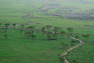 Acacia trees are the common vegetation on the shores of Lake Nakuru in Kenya.