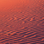 Ever-shifting sand dunes in Coral Pink Sand Dunes State Park, Utah.