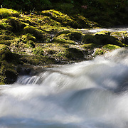 The Chehalis River flows past moss-covered rocks in Rainbow Falls State Park, Washington.