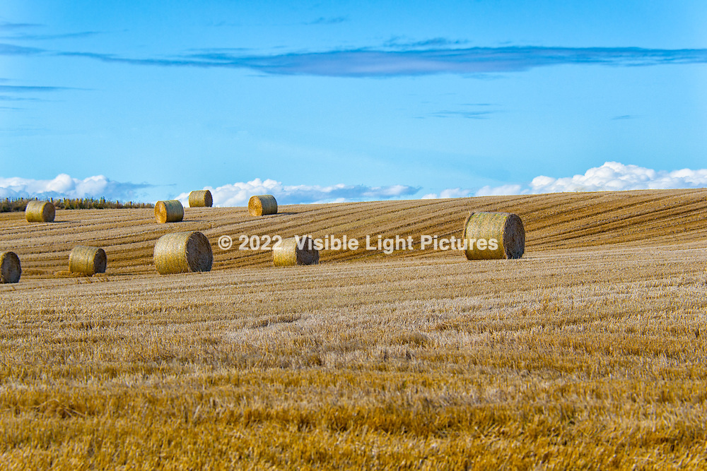 Rolls of barly  in the fields near Nairn, in the highlands of Scotland