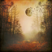 Surreal landscape on a misty morning with full moon<br /> Society6 Prints: http://bit.ly/2bVkCn6