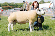 The Angus Show, Brechin, Saturday 8th June, 2013. Beltex champ from Rascal Consortium. Aso res overall show champ