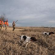 pheasant hunting grasslands, upland game bird hunting aguila pheasant hunting