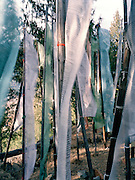 Prayer flags at Zurig Dzong high above the valley.