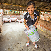 "CAPTION: ""I had no experience when I started breeding, I didn't really know what I was doing"", admits Hue as she prepares feed for her pigs. ""I used to spend a long time cooking vegetables"", she continues, ""but now I just get raw vegetables from the garden and feed them"". Through the training she's received, she's learned how to reduce the time she spends looking after her pigs, how to ensure they have a nutritious diet, how to identify better quality breeds and when the critical periods for growth are. Having applied this newly acquired knowledge, Hue has been able to dramatically increase her productivity and the income she earns through pig breeding. Indeed, she has become known as a local expert, and people in the community frequently come to her for advice. As part of the project, she's re-trained numerous other Women's Association members, and has also shared her knowledge with neighbours and the rest of her family. LOCATION: Coong Village, Huy Tuong, Son La Province, Vietnam. INDIVIDUAL(S) PHOTOGRAPHED: Lo Thi Hue."